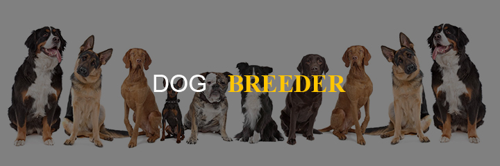 business-idea-dog-breeder 55 Business Ideas to get you started as an Entrepreneur