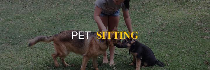 business idea pet sitting