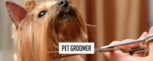 pet-groomer-300x120 Businesses You Can Start With $250 Or Less